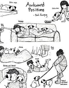 Awkward pug positions