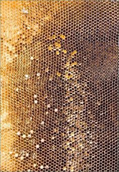 natur texture Miel aka Honeycomb is a perfect example of nature using Unity, Balance + Proportion. Each hexagon perfectly designed by nature. Patterns In Nature, Textures Patterns, Color Patterns, Print Patterns, Nature Pattern, 3d Texture, Natural Texture, Texture Design, Golden Texture
