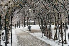 ice storm toronto 2013 - Google Search