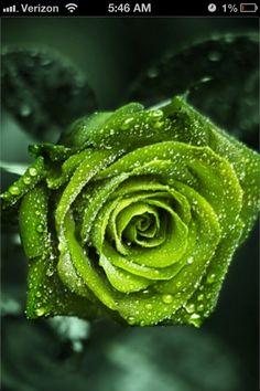 Green Flower ....