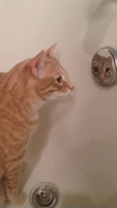 catgifcentral: Cute Cat in mirror.