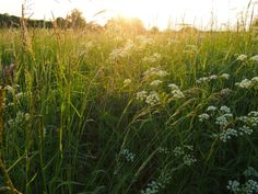 Sonnenuntergangsstimmung, Felder, Wiesenblumen. Hideaway Berlin in Gut Suckow
