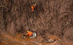 06/11 - Bombeiros trabalham no resgate de animais presos em meio a lama após o rompimento de barragens de rejeitos da mineradora Samarco no Distrito de Bento Rodrigues, no interior de Minas Gerais