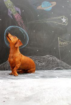 dogs in space. Cute chalk art idea.