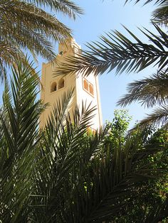 Minaret through palm leaves, Rissani, Morocco