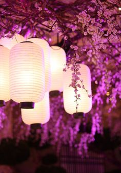 Ooooh, slight change of shape, but I love these white lanterns and wisteria - so beautiful!