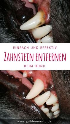 Zahnpflege beim Hund [Werbung] So you can easily and effectively remove tartar from your dog. To remove tartar and prevent but you can easily to get so the dental health and spare the dog a later scaler removal under anesthetic. Dental Health, Dental Care, Health Care, Dog Training Classes, Young Animal, Dog Costumes, Happy Dogs, Dog Care, Animals And Pets