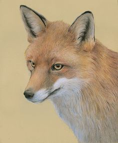 Pet Portraits in graphite, pastel and coloured pencil by professional UK artist Katrina Ann Colored Pencil Artwork, Color Pencil Art, Colored Pencils, Fox Drawing, Collage Drawing, Drawing Animals, Drawing Tips, Ink Pen Drawings, Realistic Drawings