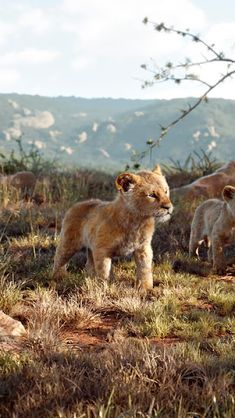 The Lion King, Simba, Nala, Zazu, Wallpaper Nala Lion King, Lion And Lioness, Simba And Nala, Lion King Movie, Disney Lion King, The Lion King, 3840x2160 Wallpaper, Disney Wallpaper, The Mighty Jungle