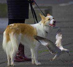 https://flic.kr/p/NRKb8y | Three Animals | Peaceful coexistence . . .