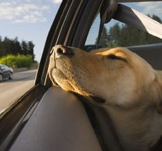 Worried about travelling with your dog, but can't bear leaving him behind? These tips for smarter travel will make you and your dog more comfortable.