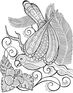 Bird Coloring Book for Adults Fresh Dover Birds Of Paradise Coloring Page 4 Coloring Pages Bird Coloring Pages, Pattern Coloring Pages, Free Adult Coloring Pages, Coloring Book Art, Doodle Coloring, Printable Coloring Pages, Colorful Pictures, Bunt, Dover Publications