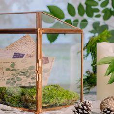 rose gold card box Glass Terrarium, Terrarium Ideas, Planter Ideas, Terrariums, Small Potted Plants, Thanks Card, Rose Gold Pink, Card Box Wedding, Glass Boxes