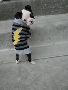 Floyd the Boston Terrier. (He's so high fashion. Cute Puppies, Cute Dogs, Dogs And Puppies, Doggies, Scottish Fold, Baby Animals, Funny Animals, Cute Animals, I Love Dogs