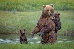 Alaska, USA - Solent News/Rex/Shutterstock