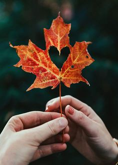 Fall in love. Fall Pictures, Fall Photos, Autumn Photography, Creative Photography, Heart Photography, Classy Girl, Autumn Aesthetic, Autumn Cozy, Fall Wallpaper