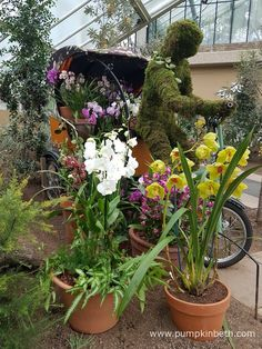 """A rickshaw, part of the display for the 2017 Orchid Extravaganza at The Royal Botanic Gardens, Kew. The theme of this year's Orchid Extravaganza is India. Plants, Botanical Gardens, Growing Plants, Floral Arrangements, Floristry, Kew, Orchids, Flowers, Indoor Plants"