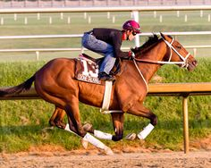 maryland thoroughbred conditioning - Google Search