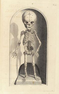 "Govard Bidloo and Gerard de Laireese : ""Fetal Skeleton"" (Anatomia humani corporis, 1690) - Giclee Fine Art Print"