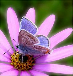 PINK & BLUE WING ARE VERY CUTE. HARD ON THE EYE. TOO CUTE !!!.