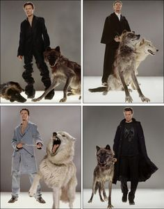 Badass Bowie and wolves. Because cats and dogs are for wussies...