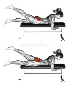 Photo about Alternate Leg Reverse Hyper. Exercising for Fitness. Target muscles are marked in red. Initial and final steps. Illustration of muscles, marked, female - 66588406 Butt Workout, Gym Workouts, At Home Workouts, Abdominal Workout, Yoga Routine, Health And Fitness Tips, Excercise, Yoga Fitness, Yoga Poses