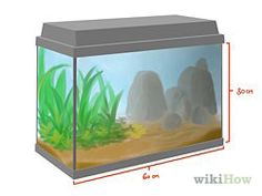 Care for Green Anole Lizards - wikiHow