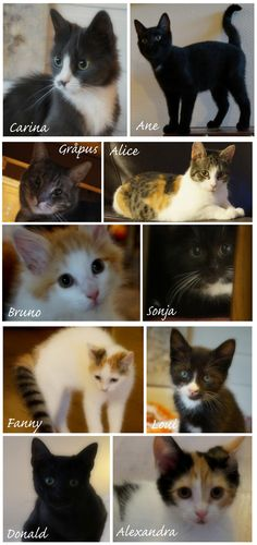 """Fosterhome cat`s who have got """"foreverhomes"""""""