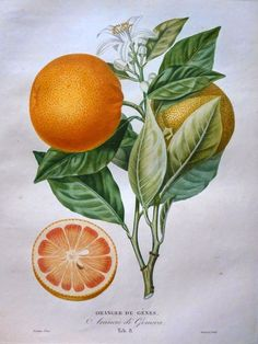 arancia di Genoa