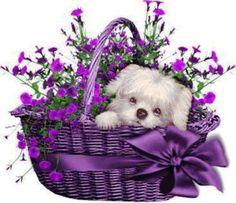 Purple Art - Purple Wicker Basket with a purple ribbon & a sweet puppy. Purple Art, Purple Love, Purple Hues, All Things Purple, Shades Of Purple, Purple Flowers, Purple Stuff, Pink, Animals Beautiful