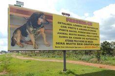 Família gasta R$ 6 mil em busca por Negão, cachorro desaparecido no DF - http://noticiasembrasilia.com.br/noticias-distrito-federal-cidade-brasilia/2015/12/01/familia-gasta-r-6-mil-em-busca-por-negao-cachorro-desaparecido-no-df/