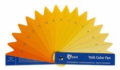 DSM's YolkFan to measure egg yolk pigmentation