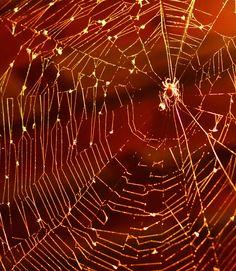 "500px / Photo ""Midnight Spider"" by Jeff Clow"