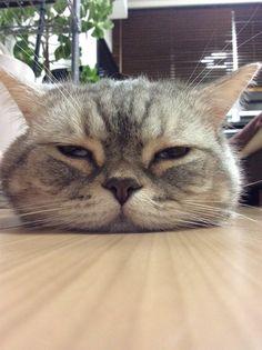 Aww squishy face