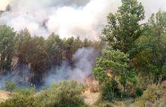 La superficie afectada por los incendios forestales en 2014 es la más baja de los últimos diez años  Ver más en: http://www.20minutos.es/noticia/2336666/0/incendios-forestales/superficie-afectada/balance-2014/#xtor=AD-15&xts=467263