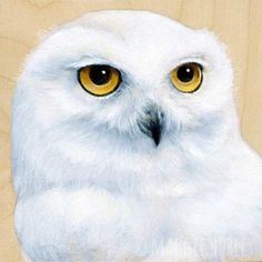 Snowy Owl - Bird Art Print on Wood - Maggie Hurley ~ Whimsy & Whatnot