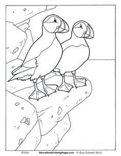 Birds Book One - Educational Fun Kids Coloring Pages and Preschool Skills Worksheets Bird Coloring Pages, Doodle Coloring, Colouring Pics, Adult Coloring Pages, Coloring Pages For Kids, Kids Coloring, Coloring Books, Zentangle, Polar Animals