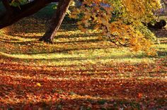 My digital photography, Fall .