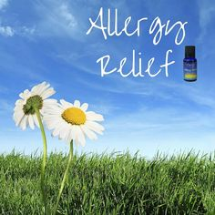 With Spring in full force right now, thousands across the nation are feeling the effect! Our Allergy Relief blend could relieve the…