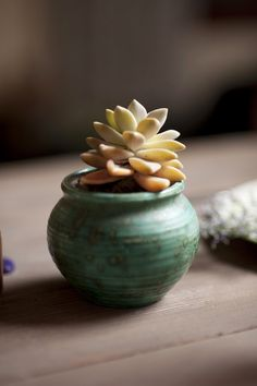 tiny succulent --I just potted an eensty-weentsy Jade plant in a tiny white ceramic pot, and it is so dang cute!!!