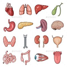 Human Organs Cartoon Icons in Set Collection #Cartoon, #Organs, #Human, #Collection