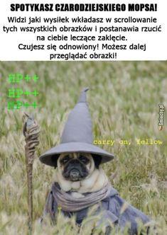 Polish Memes, Really Funny, League Of Legends, Haha, Star Wars, Cute, Pug, So Funny, Starwars