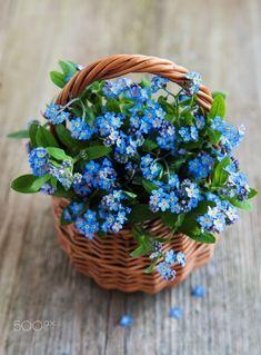 Forget-me-not flowers in basket by Olena Rudo / Flowers Nature, Spring Flowers, Wild Flowers, Amazing Flowers, Beautiful Flowers, Forget Me Nots Flowers, Flower Arrangements Simple, Deco Floral, Flower Aesthetic