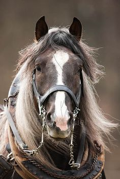 The Having a Farm/Intending to Be More Lazy Thread - Page 11 Big Horses, Work Horses, Horses And Dogs, Animals And Pets, Cute Animals, All The Pretty Horses, Beautiful Horses, Animals Beautiful, Clydesdale