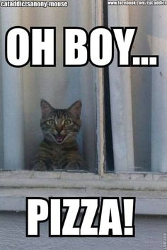 OH BOY... PIZZA! Tabby cat will keep an eye out for the pizza dude/dudette.