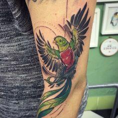 Taniacatclaw on instragram. #Quetzal