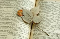yellow rose pressed between the pages......a saved memory.......