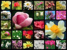 Flowers Mosaic Computer Art, Wallpaper, Google, Flowers, Mosaic, Background Images, Wallpapers, Royal Icing Flowers, Flower