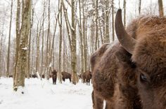 Projeto fotográfico de Stefano Unterthiner: Animals Face to face