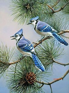Toland Home Garden Blue Jay Duet 28 x 40 Inch Decorative Fall Winter Bird Pine Tree House Flag Pretty Birds, Beautiful Birds, Blue Jay Bird, Bird Drawings, Horse Drawings, China Painting, Bird Pictures, Wildlife Art, Bird Art